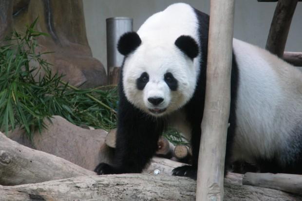 2007-08-05-Chiang-Mai-Zoo-006-620x413