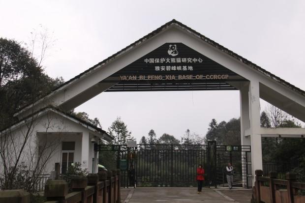 2011-11-15-2011-11-20-Yaan-Bi-Feng-Xia-Base-of-CCRCGP-001-620x413