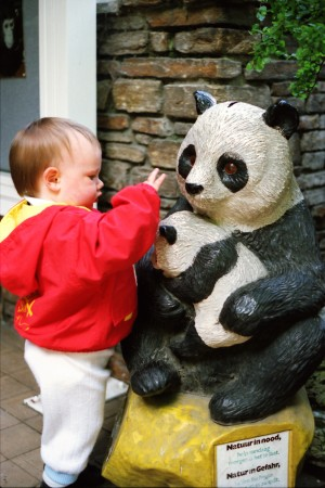 Jeroen Jacobs during his first giant panda visit at the Zoo van Antwerpen